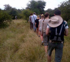Kruger Park game walk