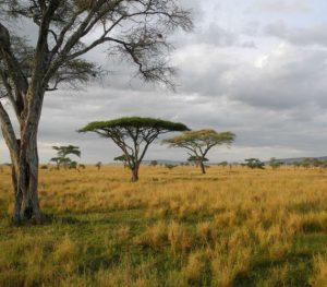 Masai Mara landscape