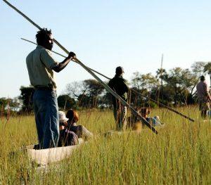 Mekoro in the Okavango Delta