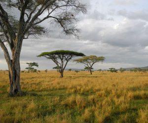 Kenya and Tanzania Camping Safari