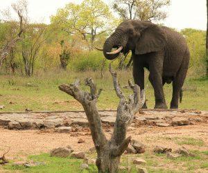 Southern Highlights Overland Safari Kruger Park elephant